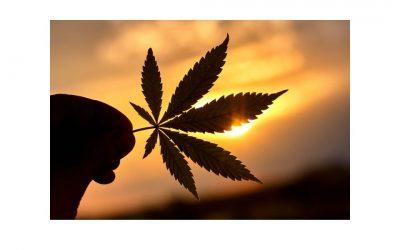 Cannabis oil Cape Town